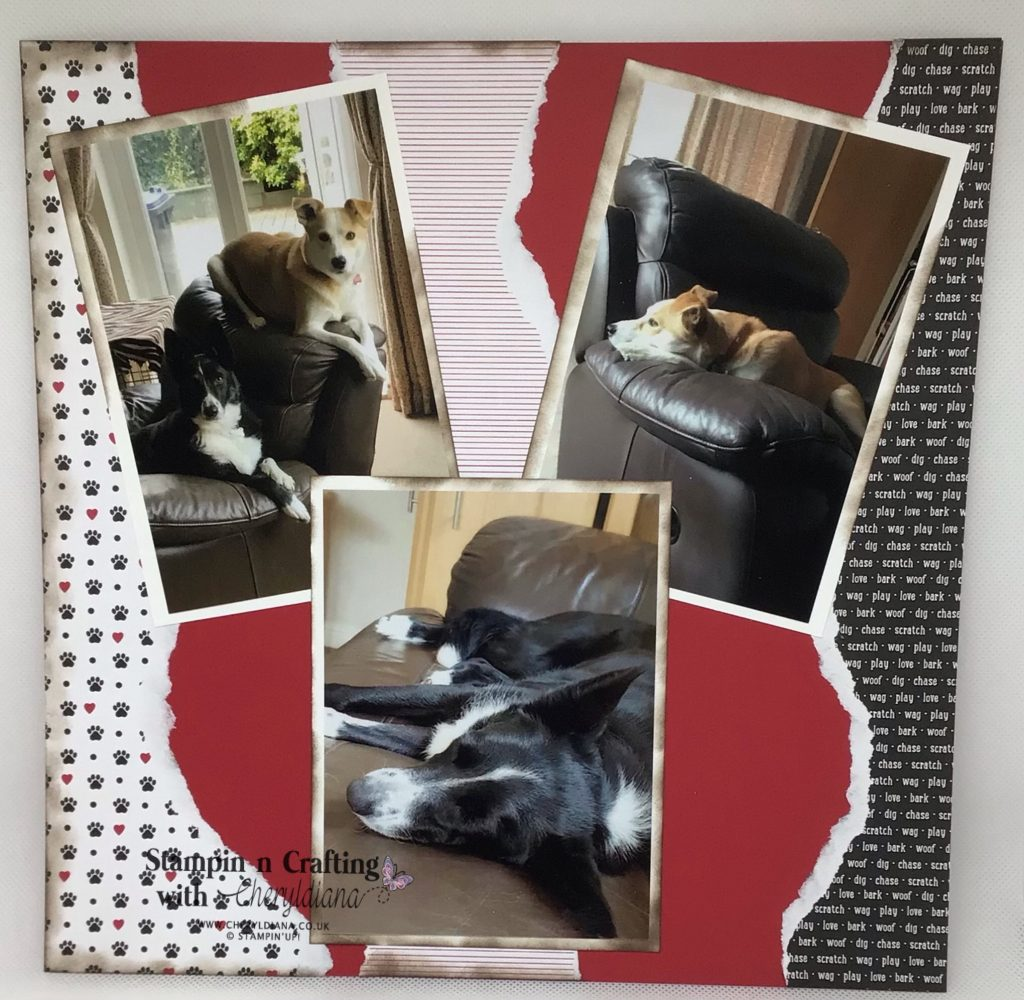 Scrapbook layout - Its a dogs life