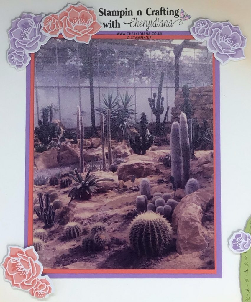 Photograph of the Cactus Area at Jungleland in Barnstable